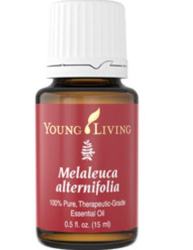 Tea tree essential oil, Melaleuca essential oil, Young living essential oils