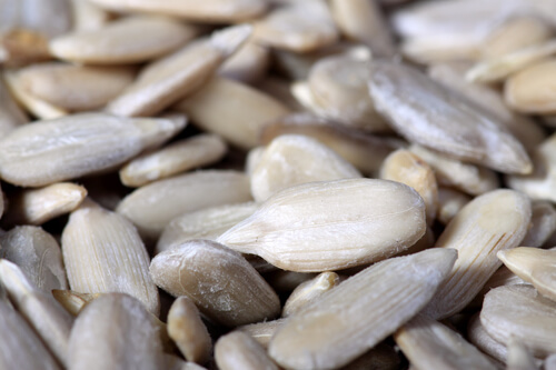 close up of sunflower seeds